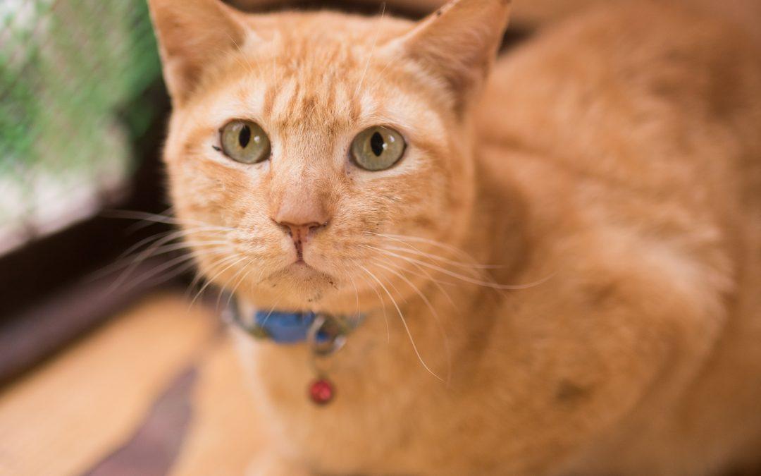ROCKY (CAT)